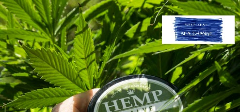 How to Make Money Selling CBD Oil Online - header