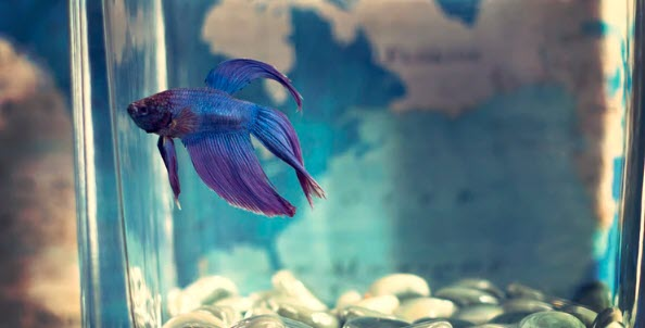 How to Sell Pet Supplies Online - fish tank