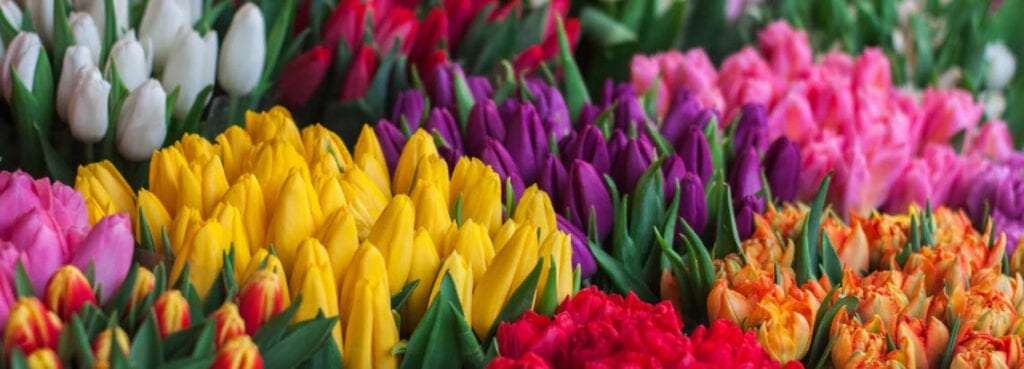 How To Make Money Selling Flowers Online - colourful flowers
