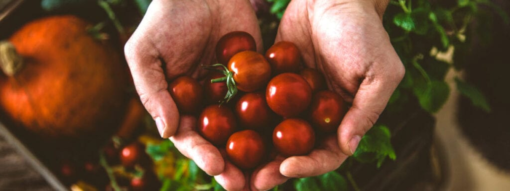 How to sell organic products online - man holding tomatoes